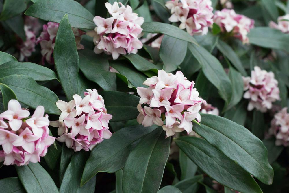 Top 10 Shrubs – Essex Garden Designs