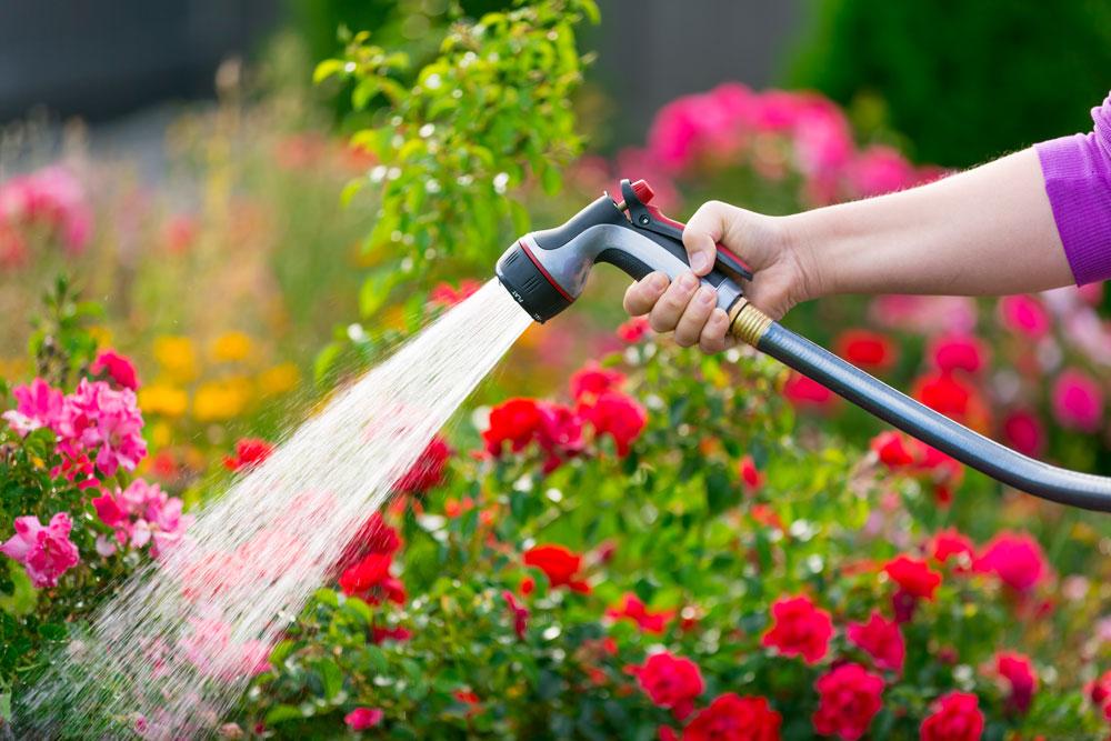 Watering Plants – Essex Garden Designs